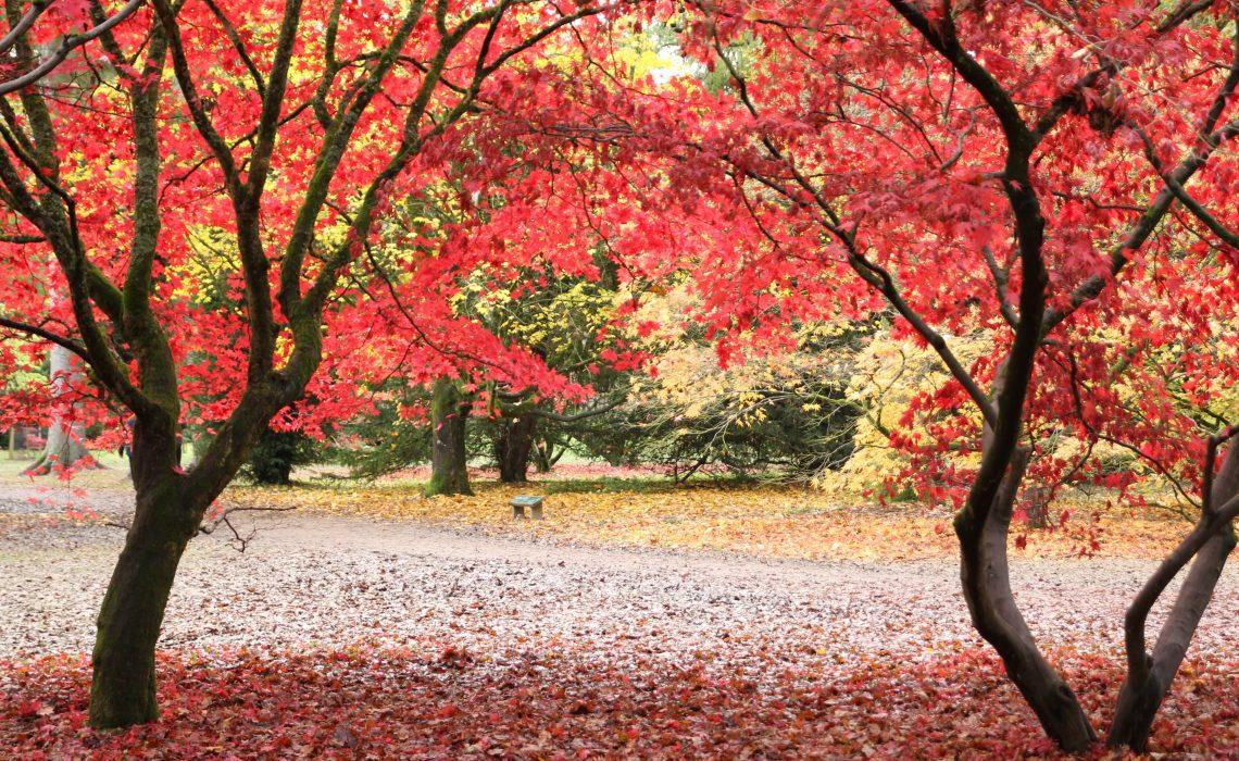 Westonbirt National Arboretum,Gloucestershire